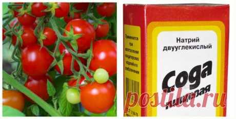 Подкормки томатов поваренной солью
