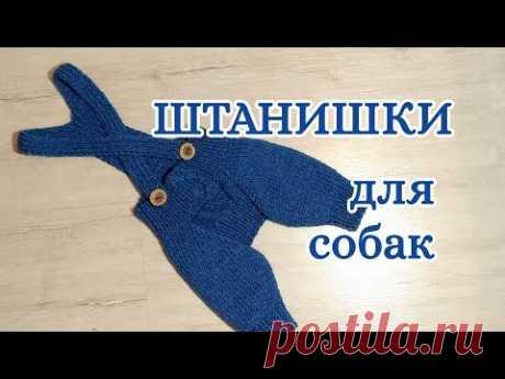 Штанишки для собак спицами, Dog pants