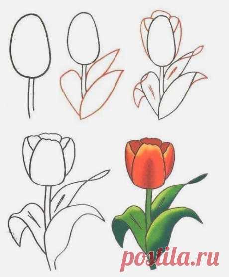 35 карточек в коллекции «Уроки рисования цветов для детей» пользователя esterkot в Яндекс.Коллекциях