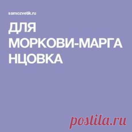 (12) Pinterest