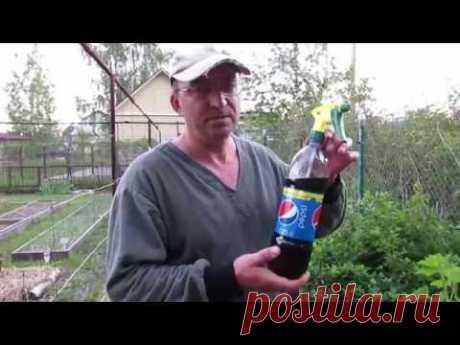La bebida contra gallovoy los pulgones sobre la grosella roja (la parte 1) - YouTube