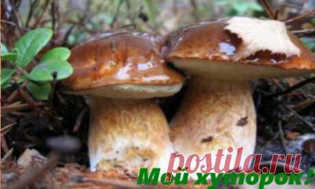 Как вырастить грибы в саду? - Мой хуторок!