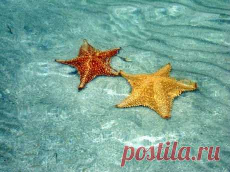 Бока-дель-Драго - пляж морских звезд - Путешествуем вместе