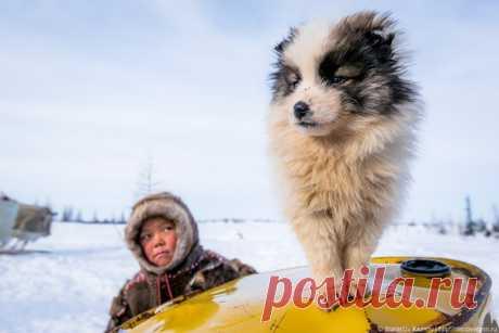 Доброе утро от малыша Стефана и его четвероного друга! Снимок был сделан в апреле на Ямале. Автор фото – Станислав Казнов: nat-geo.ru/photo/user/24745/