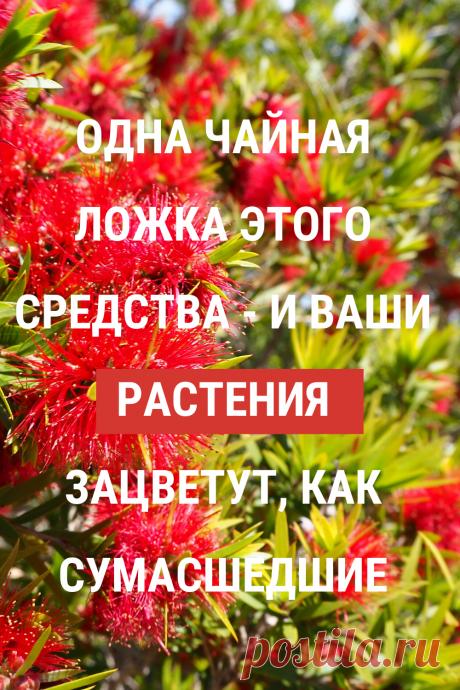 Отличная подкормка для ваших комнатных цветов. Будут расти и цвести прекрасно! #цветы #комнатные #растения #удобрения #подкормка