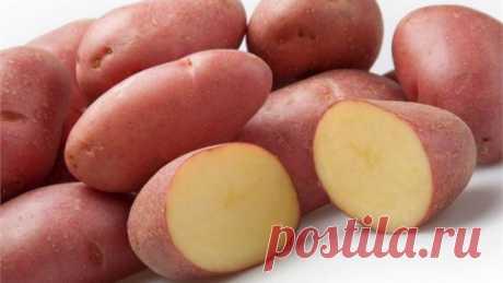 Какую минусовую температуру выдерживает картофель?
