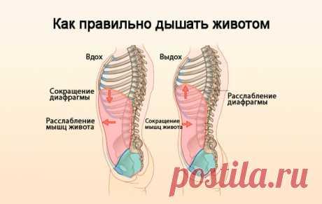 Упражнения дыхательной гимнастики помогут эффективнее худеть. | Делаем тело красивым | Яндекс Дзен