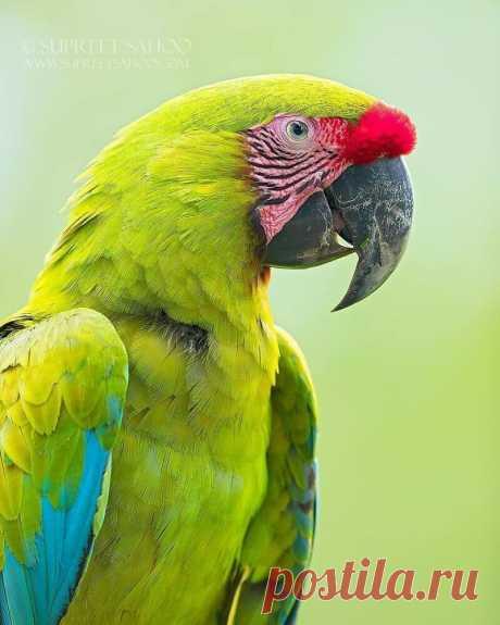 Животный мир Коста-Рики в объективе Суприта Саху
