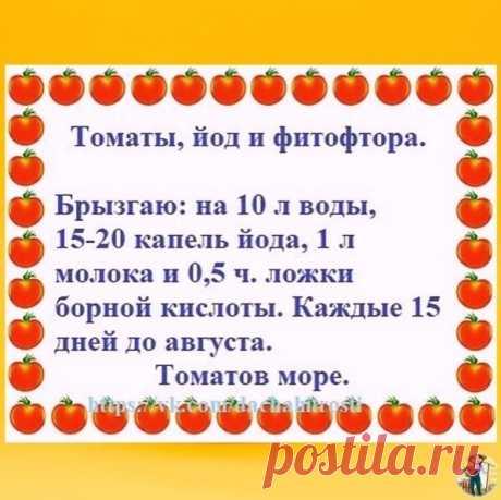 Теперь так и делаю, помидоры без всяких парников на кустах спеют)  Я была в прошлом году удивленна такому сбору, кушали до первого снега ,а после замучилась перерабатывать, правда очень много помидор было.