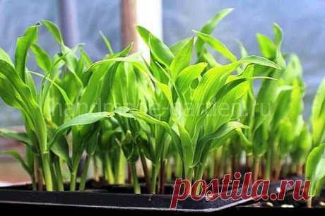 Посадочный календарь Украины на апрель 2021 года для овощных и зеленных культур