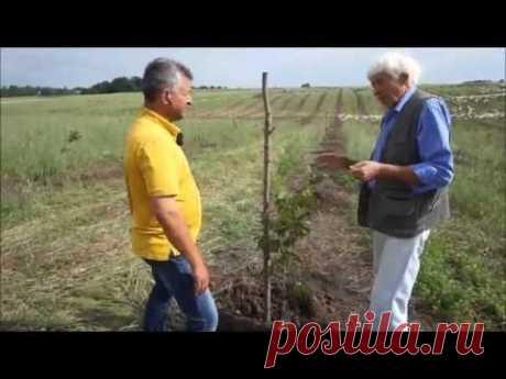 Рациональное использование земли в орехово-фундуковом саду за счёт выращивания гусей