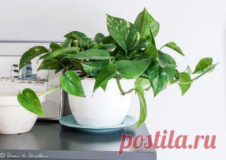 11 растений, которые вы можете поставить даже… в ванной комнате (и им ничего не будет!)