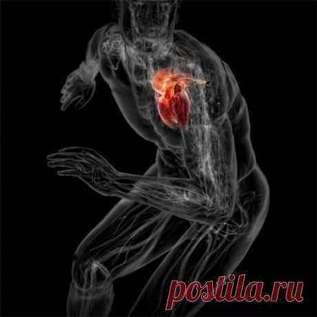Тренировка сердечной мышцы
