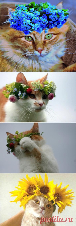 Купальские коты