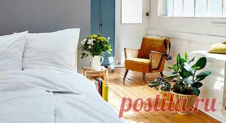 Лучшие растения для спальни и детской   Журнал Домашний очаг