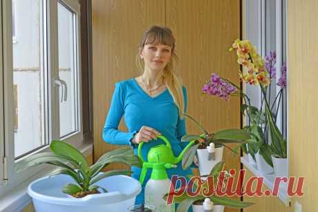 Инна Орхидеи