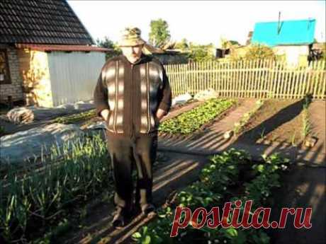 Вкусный Огород: Удаление усов клубники