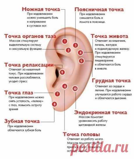 Массаж активных точек уха для здоровья всего организма
