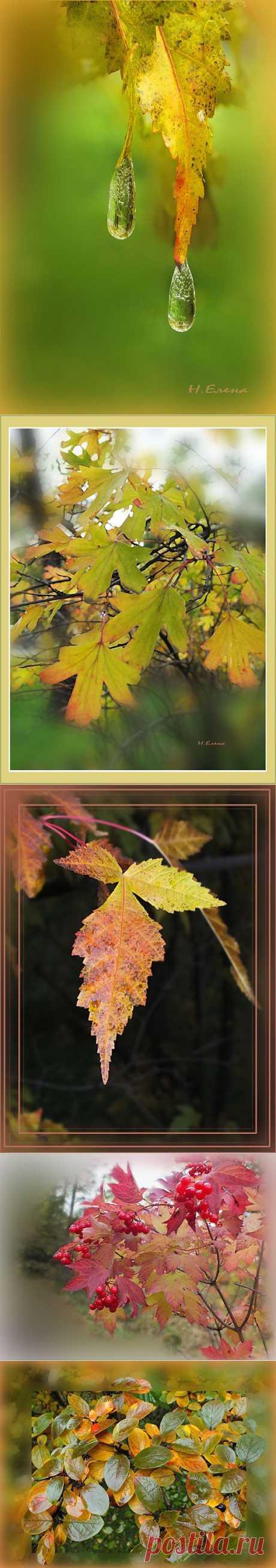 Осенняя рапсодия | Фотоискусство
