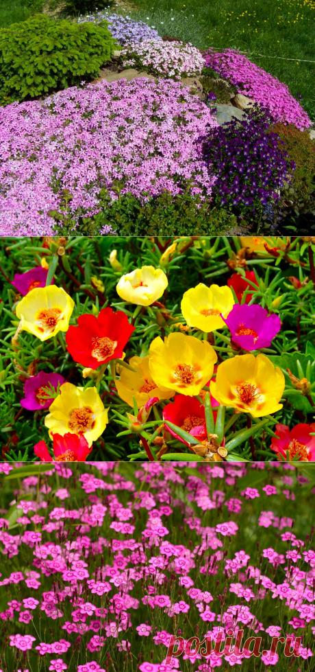 Самые неприхотливые почвопокровные растения для любых типов грунта