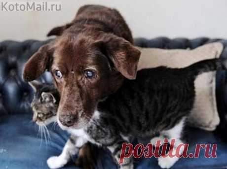 La gata-lazarillo ha devuelto la alegría de la vida que ha perdido la vista al perro