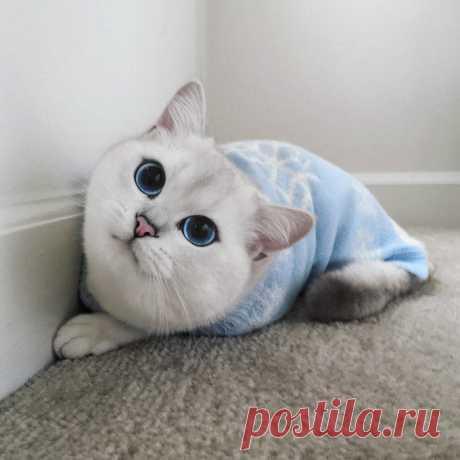 Этот кот игрушечный, а выглядит как настоящий. Или наоборот?