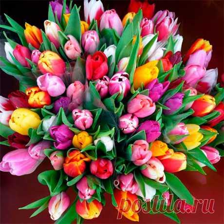 Цветы тюльпаны, букеты (53 фото) картинки, видео