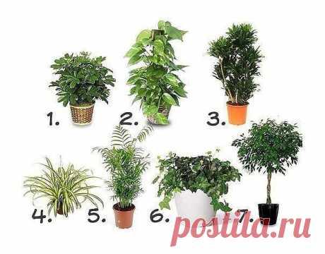 Комнатные растения, очищающие воздух  Воздух в квартире в несколько раз загрязненнее, чем на улице. Различная бытовая техника, пластиковая мебель, мебель из ДСП, линолеум, панели, краска, обои, стиральные порошки и моющие средства – все это насыщает воздух в квартирах и офисах ядовитыми соединениями: бензолом, толуолом, фенолом, формальдегидом, угарным и углекислым газами, оксидами азота и аммиаком.  Лучшие 7 растений для очистки воздуха внутри помещения:  1. Шеффлера (...