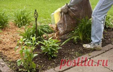 9 способов вернуть почве плодородие | Почва и плодородие (Огород.ru)