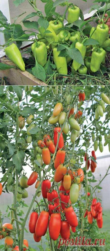 (+1) тема - Секреты успешного урожая Галины Доновой | ОГОРОД БЕЗ ХЛОПОТ