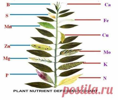 почему заболевает или гибнет растение. Сохраните отличную табличку | Красота природы | Яндекс Дзен