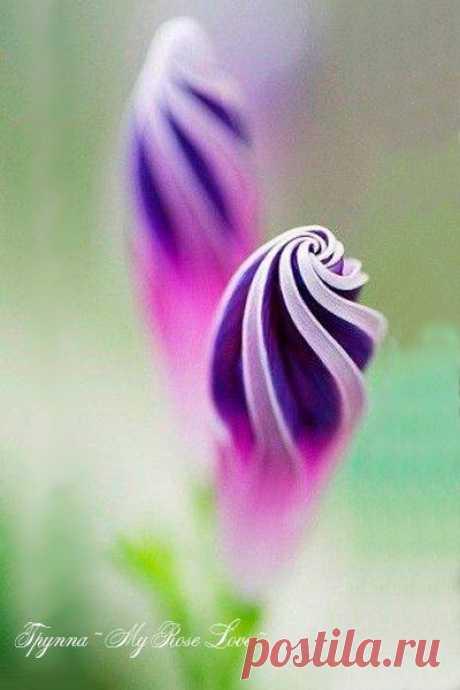 Красота для всех разная. Самое главное то, что мы храним в своей Душе..