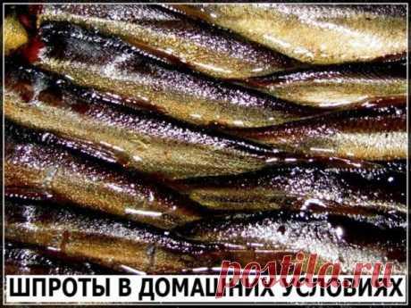 Шпроты - Простые рецепты Овкусе.ру