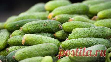 Урожай все лето: подкормка для огурцов в июле Чтобы урожайность не пошла на спад, огурцы нужно подкармливать в начале плодоношения.