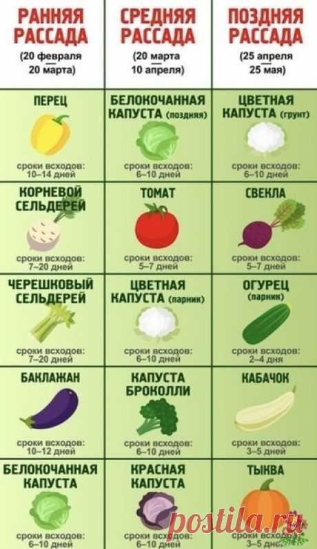 Когда сеять овощи на рассаду: