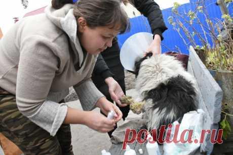 160 тысяч рублей на операцию собаке собрали неравнодушные воронежцы