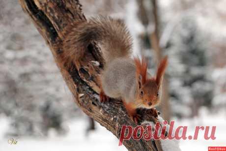 Фотограф путешественник Виталий Исиков. Фото животных - Фотосайт Расфокус.ру