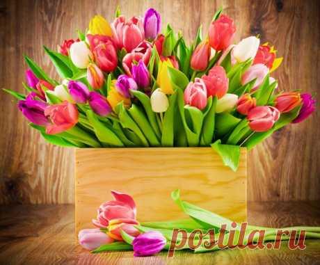 Пусть радует весна цветами, Лучистым солнцем за окном, Любовью, нежностью, теплом И исполнением желаний!