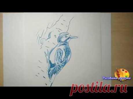 Учимся рисовать любую птицу за 5 минут(наброски,скетчи)