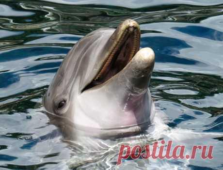 Дельфины: фото, образ жизни, язык, особенности