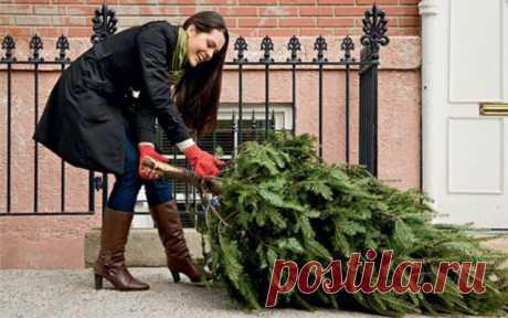 Когда убирать елку | Телеканал СТБ Когда убирать елку после празднования Нового года и почему следует придерживаться именно этой даты? Читайте подробнее в нашем материале