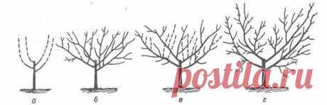 Правильная обрезка сливы – советы для начинающих Формирование кроны сливы – дело непростое и очень важное. Если неправильно обрезать дерево, урожай будет скудным. Чтобы этого не произошло, узнайте, как и когда делают обрезку сливы в саду. Обрезку и …