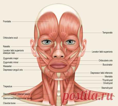 Сенсационный метод ОМОЛОЖЕНИЯ лица, которому нет аналогов | Golbis