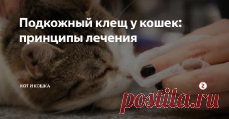 Подкожный клещ у кошек: принципы лечения Подкожный клещ – паразит, провоцирующий заболевание демодекоз у кошек. Он поражает волосяной и кожный покров, свою деятельность проявляет зачастую при сниженном иммунитете организма. На фоне общего недомогания демодекс активизируется, а продукты его жизнедеятельности оказывают пагубное влияние на здоровье животного. Паразиты доставляют питомцу массу неудобств: болезнь зачастую протекает долго, соп