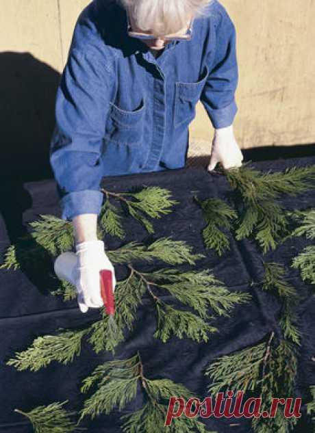 Окрашивание ткани и готовой одежды.