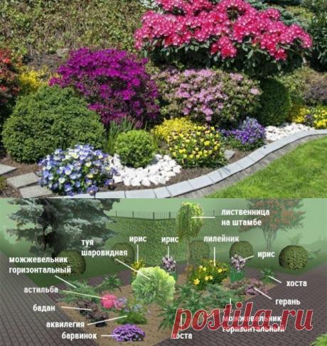 Клумбы непрерывного цветения – схемы с описанием цветов | Цветники и клумбы (Огород.ru)