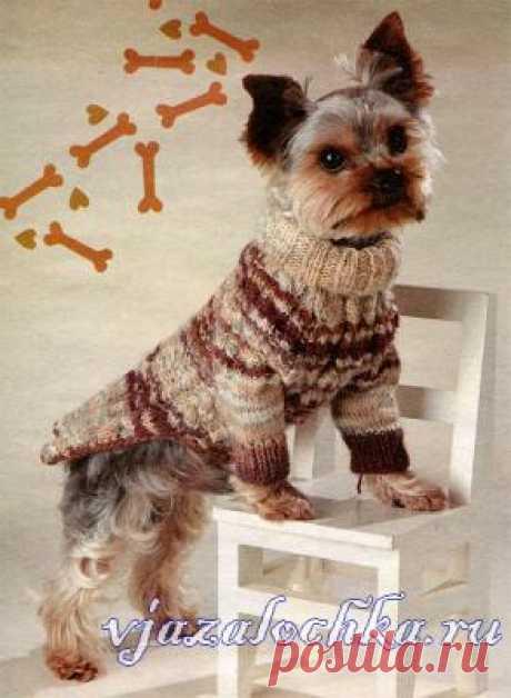Вязание для собак – свитер с косами