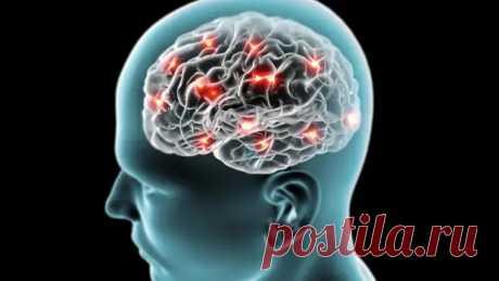 Что такое мозг и как использовать его на 100%? - Неспешный разговор - медиаплатформа МирТесен