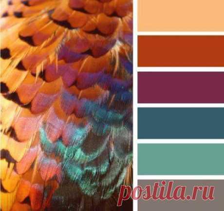 Цветовые сочетания. Идеи для вдохновения