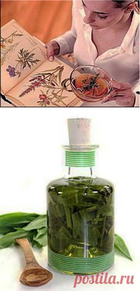 Золотой ус - лекарственное растение на вес золота / Будьте здоровы